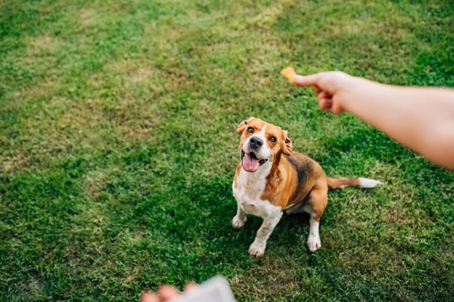 Best Hemp Dog Treats For Your Pal