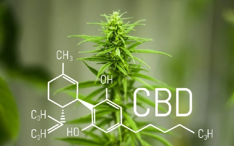 Cbd cannabidiol formula