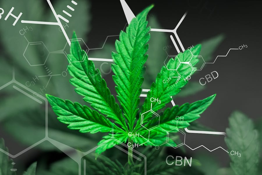 8 Popular Cannabinoids