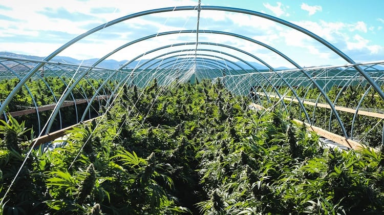 The Farm Bill Plays A Big Role In CBD's Popularity